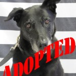 Adopted Ebony